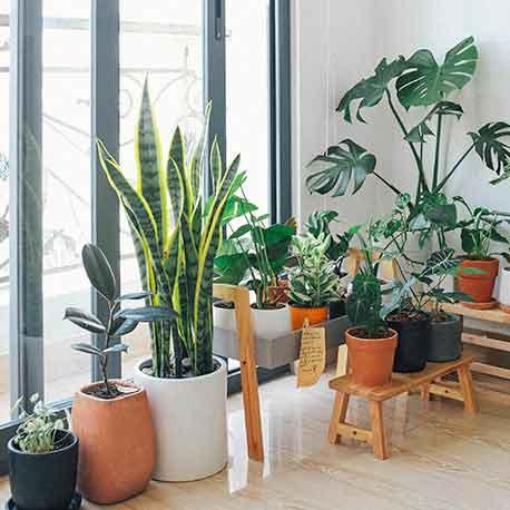 comprar plantas de interior a domicilio en Madrid