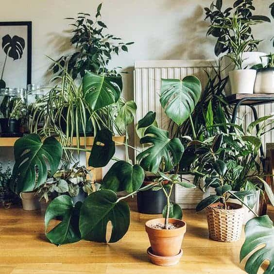 Plantas de interior a domicilio en Madrid.