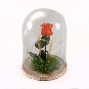 Rosa eterna naranja domicilio en madrid