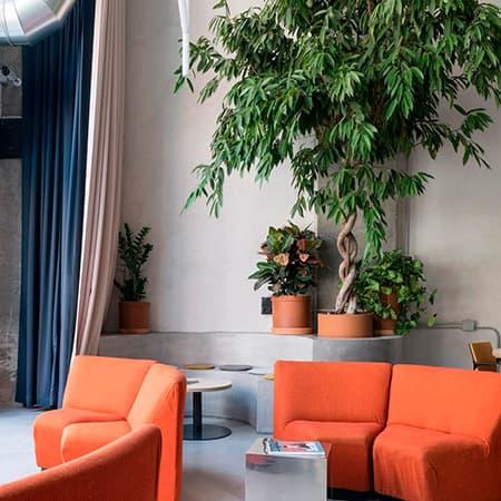 Floristería para decoración con plantas y flores de espacios interiores en Madrid.