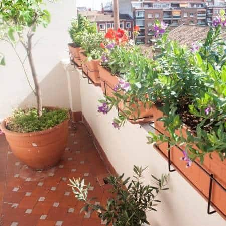 Decoración con planatas de terrazas y jardines en Madrid